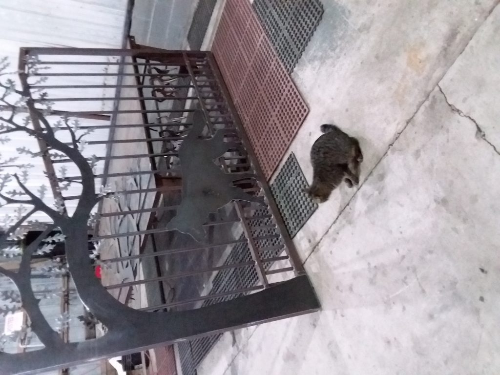 A cat standing beside an iron german shepherd on a decorative gate made for Indiana home.
